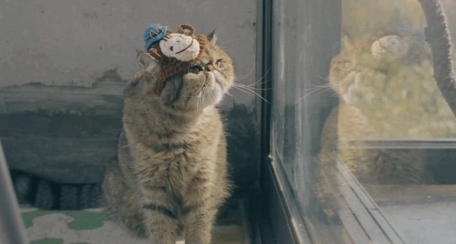 knit hats for cats